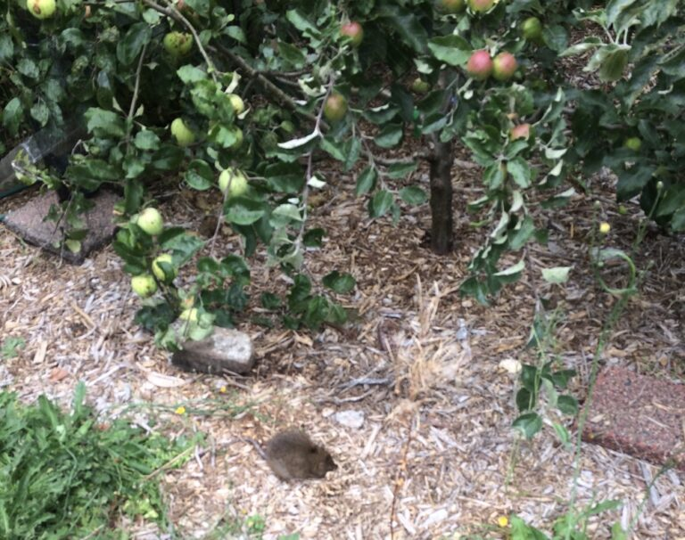 Finding Poetry (& Possums)